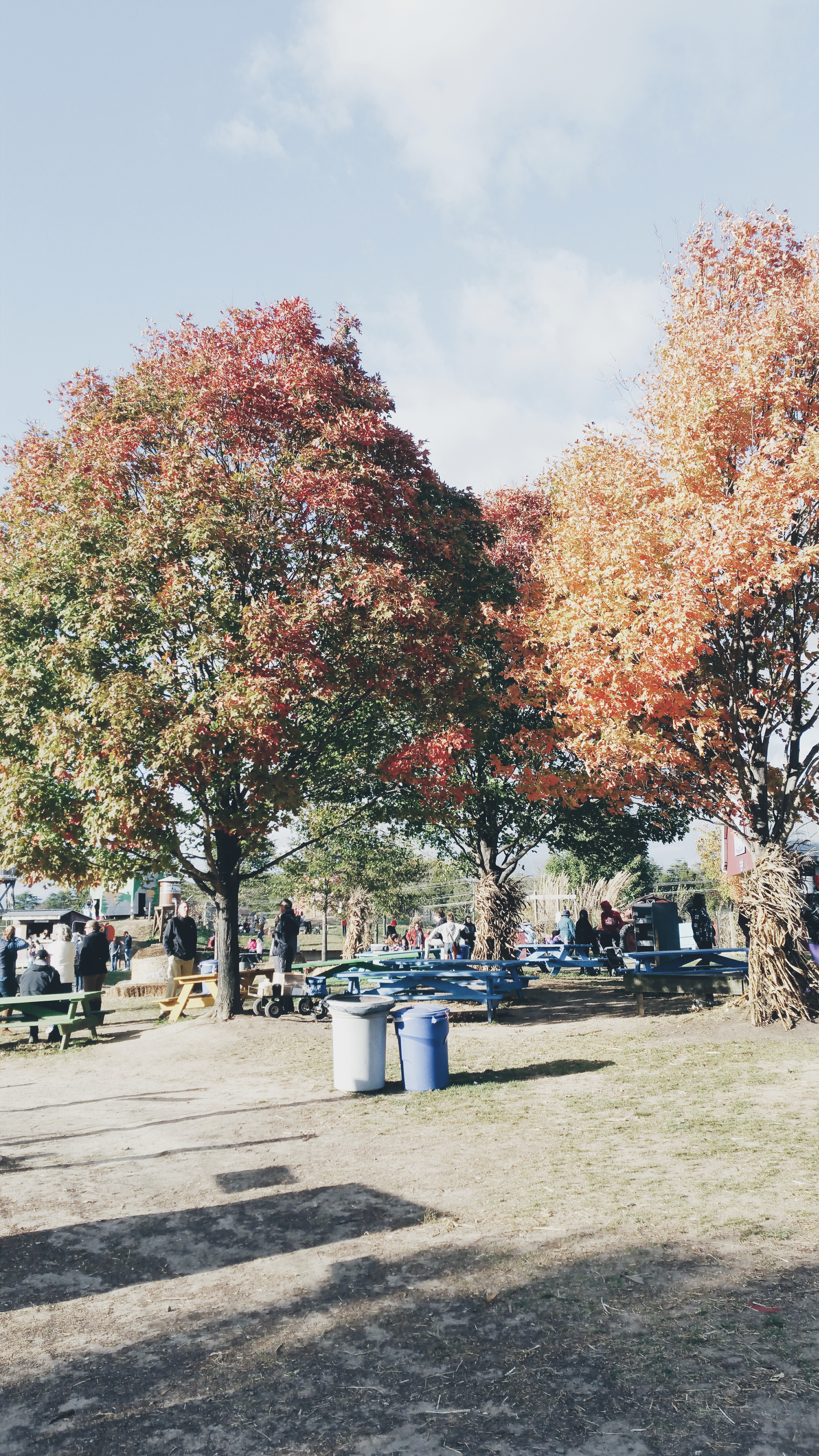 Fall Travel: Our Trip to Pumpkin Patch at Cox Farms