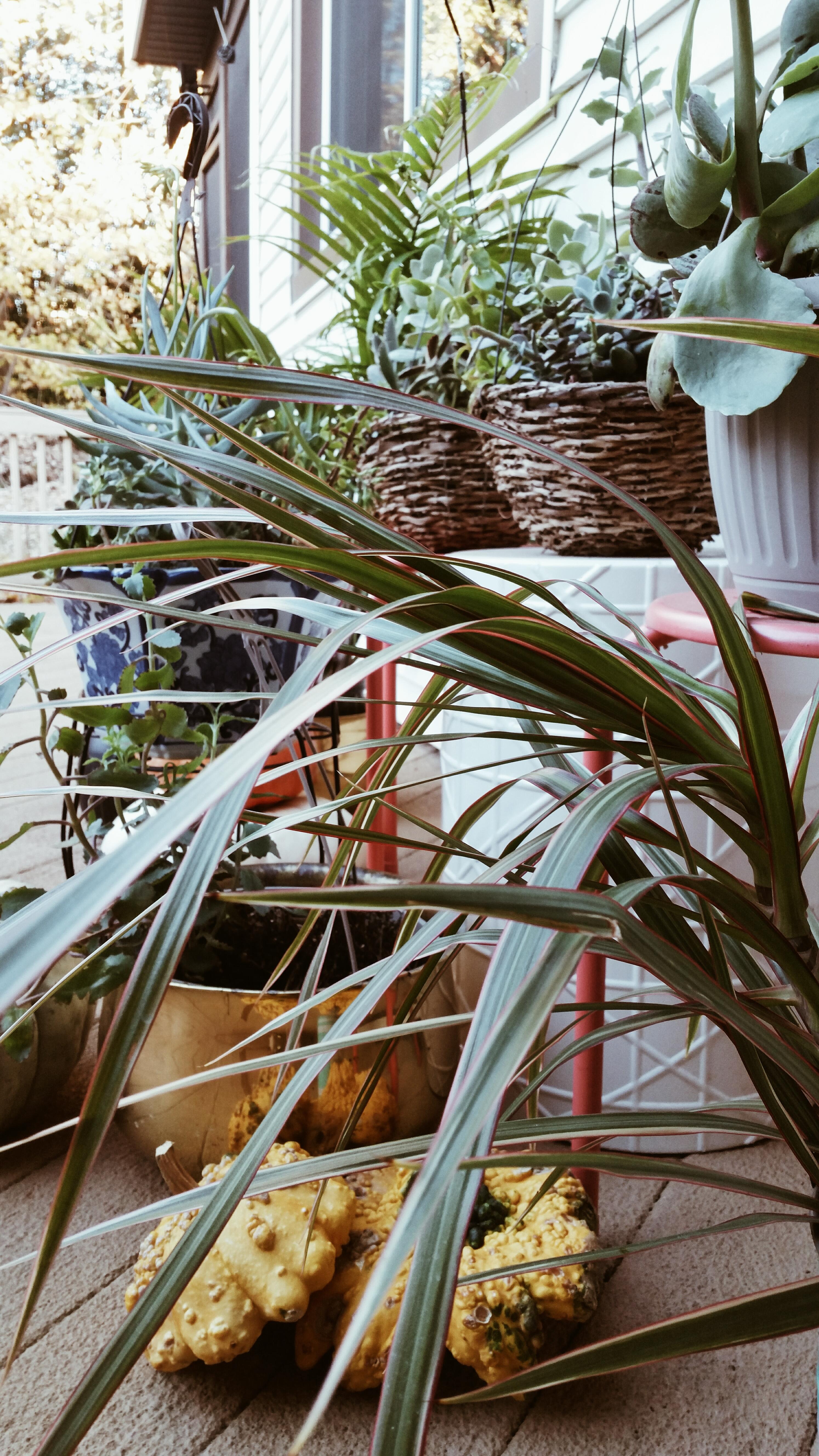 lowe's haul succulent via alwayscreatingblog.com